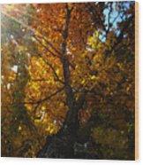 Falling Light Wood Print