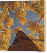 Falling Sky Wood Print