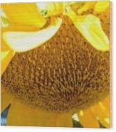 Falling Sunflower Wood Print