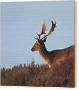 Fallow Buck Wood Print