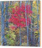 Fall's Flame Wood Print