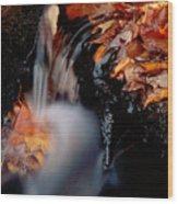 Falls Foliage Wood Print
