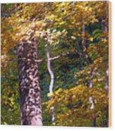 Falls Splendor Wood Print