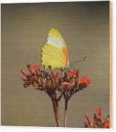 False Dotted Border Butterfly Wood Print