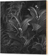 False Hellebore Wood Print