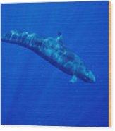 False Killer Whale Wood Print