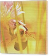 Fame Is A Bee Wood Print