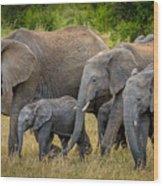 Family Of Elephants Wood Print