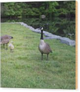 Family Of Geese Wood Print