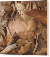 Family Of Leaves Wood Print