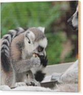 Family Of Lemurs Wood Print