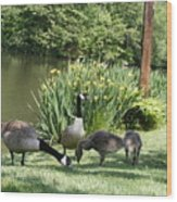Family Outing Of Geese Wood Print