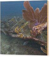 Fan Coral On Elbow Reef In Key Largo Wood Print