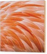 Fan Of Feathers Wood Print