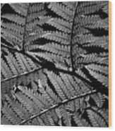 Fan Of Fronds Wood Print