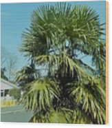 Fan Palm Tree Wood Print