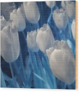 Fanciful Tulips In Blue Wood Print