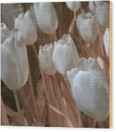 Fanciful Tulips In Peach Wood Print