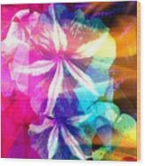 Fancy Pansy Candy Wood Print