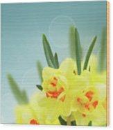 Fancy Spring Narcissus Garden  Wood Print