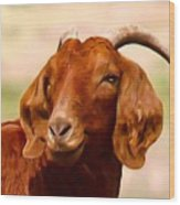 Fancy The Red Goat Wood Print