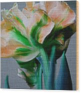 Fancy Tulip Wood Print