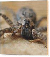 Spider Close Up Wood Print