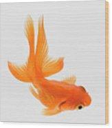 Fantail Goldfish (carassius Auratus), Elevated View Wood Print