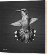 Fantail Hummingbird Square Bw Wood Print