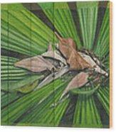 Fantail Palm Plateau Wood Print