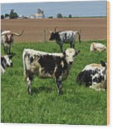 Fantastic Farm On A Spring Day With Cows Wood Print