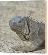 Fantastic Gray Iguana With Spines Along His Back Wood Print
