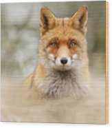 Fantastic Mr Fox Wood Print