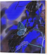 Fantasy Blue Butterfly Wood Print