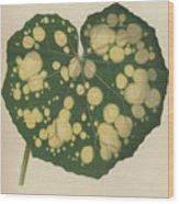 Farfugium Grande  Leopard Plant, Green Leopard Plant Wood Print