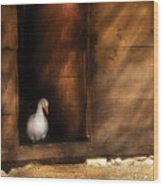 Farm - Duck - Welcome To My Home  Wood Print