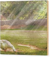 Farm - Geese -  Birds Of A Feather - Panorama Wood Print by Mike Savad
