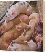 Farm - Pig - Five Little Piggies And A Chicken  Wood Print