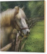 Farm - Horse - White Stallion Wood Print