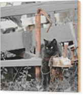 Farm Kitty Hanging Out Wood Print