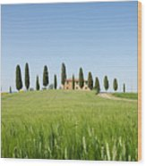 Farmhouse With Cypress Trees And Crops In Tuscany Wood Print