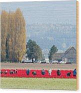 Farming Tulips L574 Wood Print