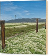 Farmland Scenery Wood Print