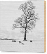 Farndale Winter Wood Print