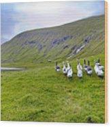 Faroes Geese Wood Print