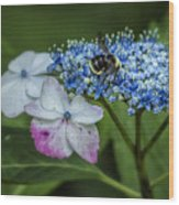 Fast Food For Bumblebees Wood Print