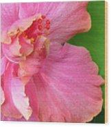 Favorite Flower 3 Wood Print