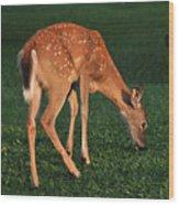 Fawn At Dusk Wood Print