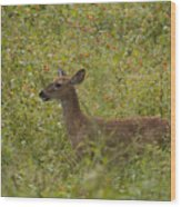 Fawn In A Field Of Flowers Wood Print