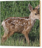 Fawn In The Open Wood Print